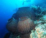 vida en el fondo del mar