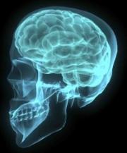 Cerebro, evolución, envejecimiento