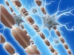 mielina en el cerebro
