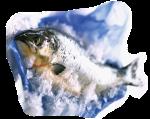 pescado congelado